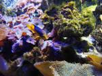 Coral by jehsantana