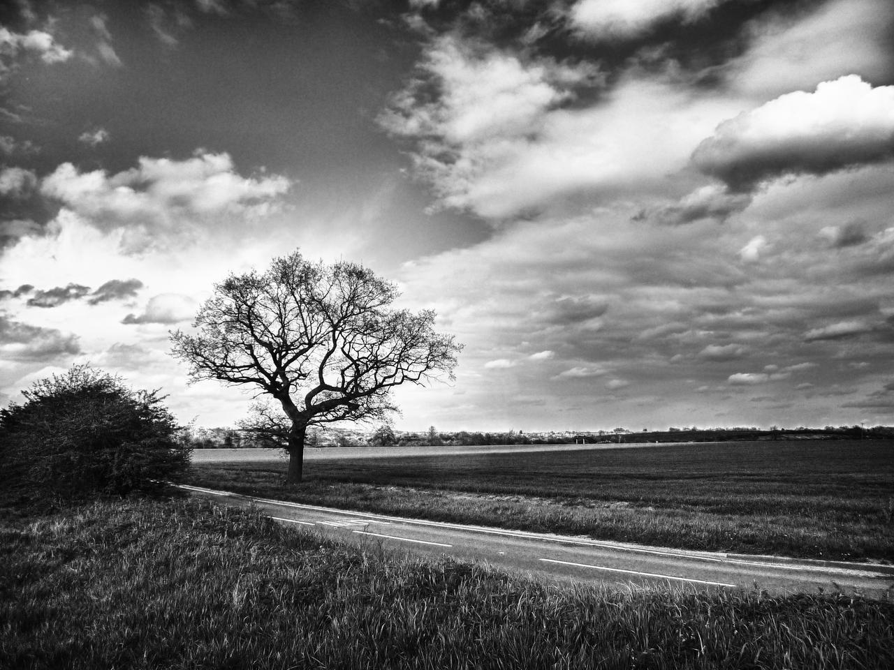 lonely tree by bebadawn on deviantART