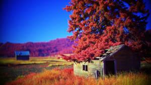 K-town homestead