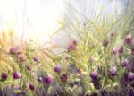 Summer morning meadow