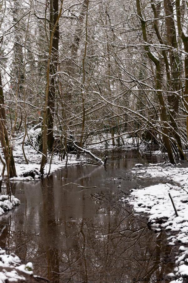 Winter forest by JoseRuiz-photo