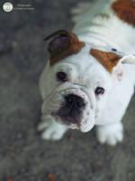 Puppy Love by MVBPhotography