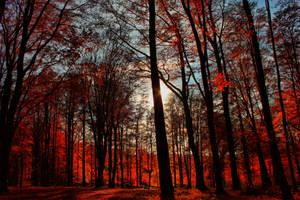 Days in the Trees II by Khaosprinz