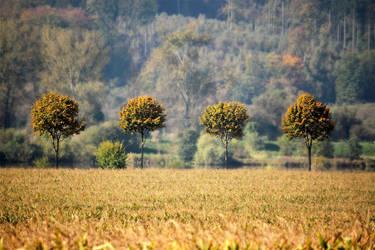 Four Trees by Khaosprinz