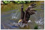 Baywatch - Chicken Rescue