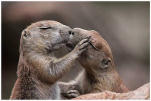 Gimme a Kiss, hun