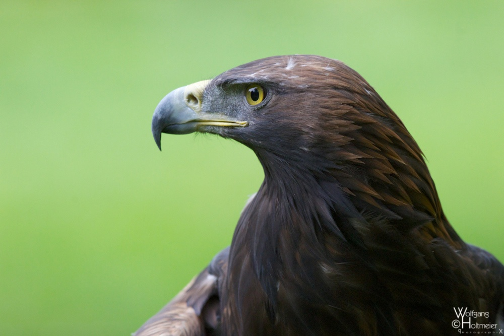 2012-98 Golden Eagle by W0LLE