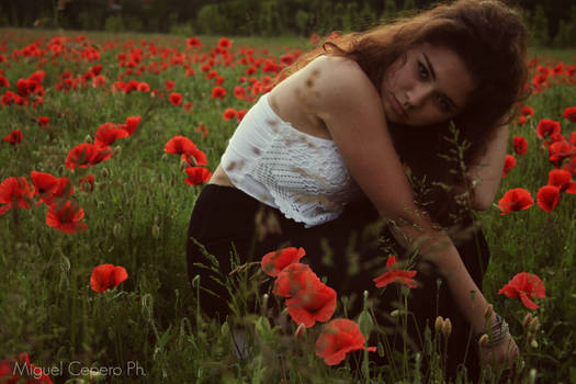 Silent Poppies