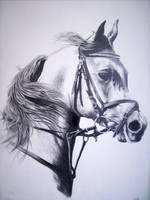 horse with pencil