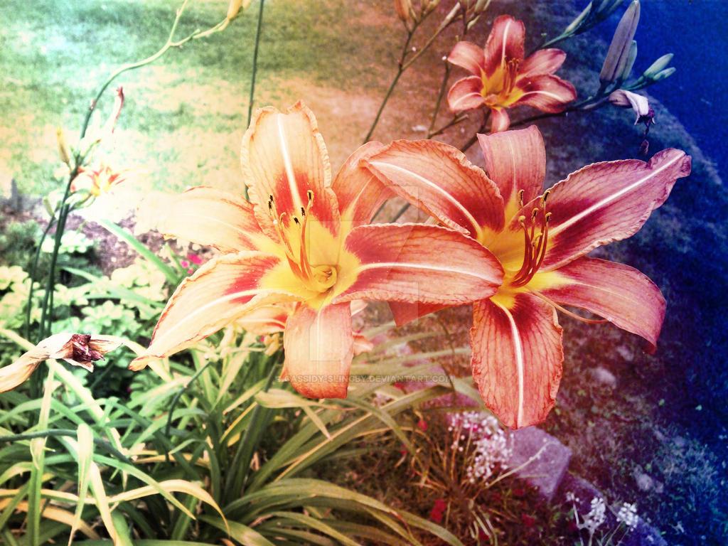 raindow tiger lilys by Cassidy-Slingby