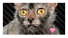lykoi cat love stamp by OrangeOsprey