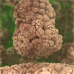 mandel-brain-bulb - MB3D with Paras/Map