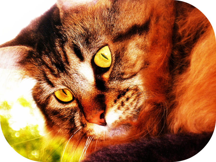 http://fc02.deviantart.net/fs70/i/2012/164/6/f/hello_kitty_by_amyvarens-d53b6as.jpg