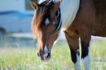 Wild Horse Stock 06