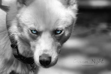 My Eyes by Jaded-Night