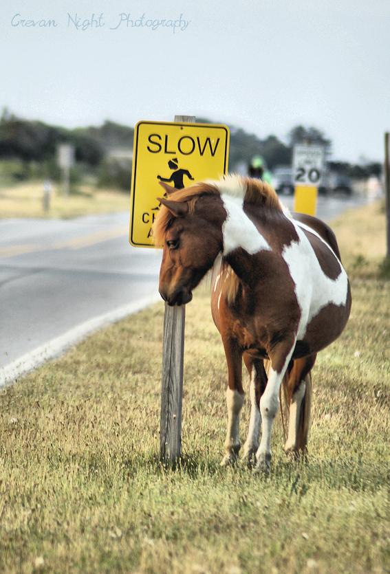 Slow Horses - It's Not Raining Every Day