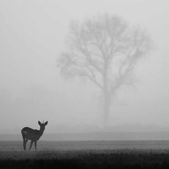 Foggy morning by JMrocek
