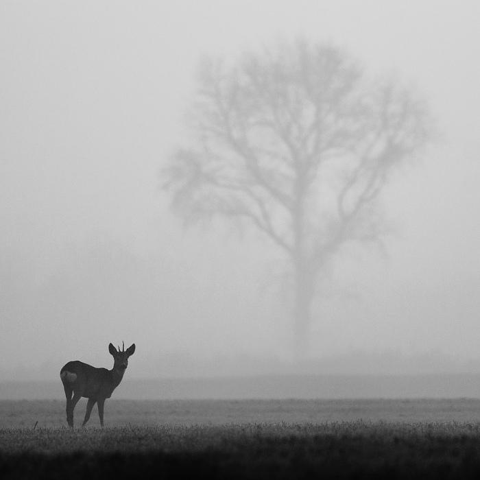 Foggy morning by JMrocek