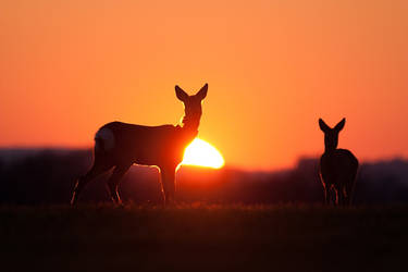At sunset by JMrocek