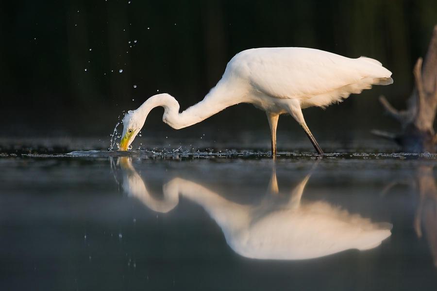 Fishing by JMrocek