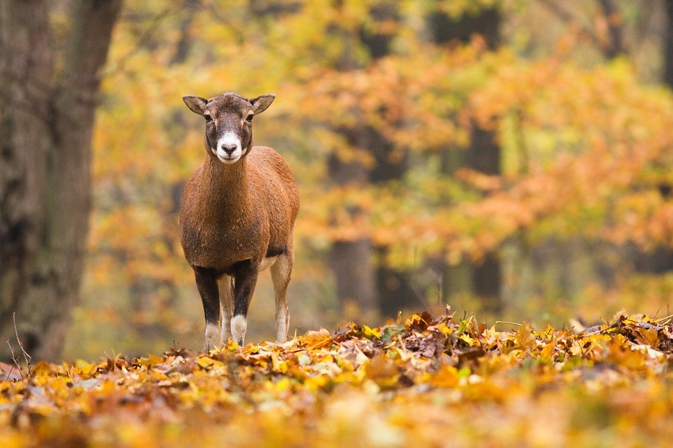 Autumn forest by JMrocek