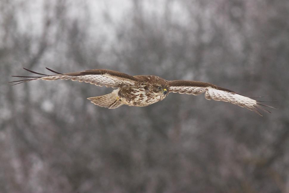 In flight by JMrocek