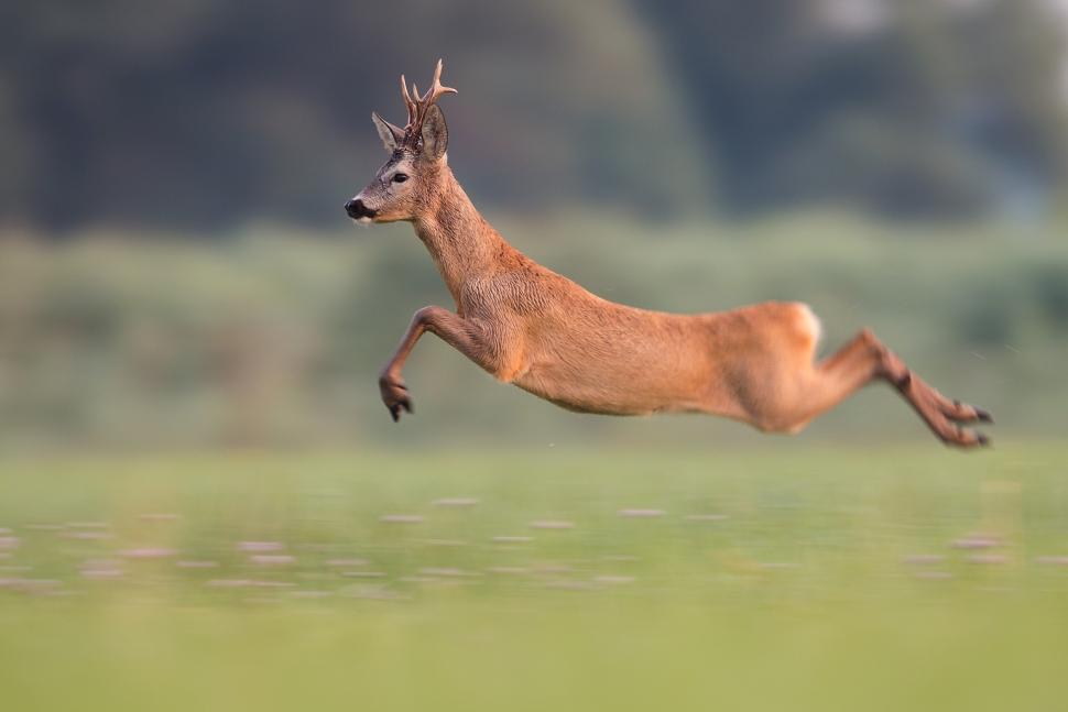 Long jump by JMrocek
