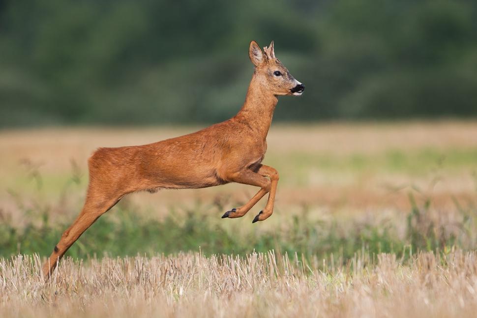 Young buck by JMrocek