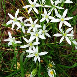 little flowers by st2wok