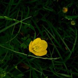 little yellow flower by st2wok