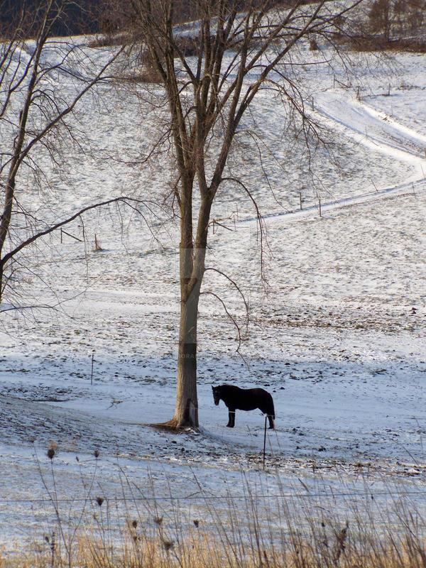 Black Pony by solusauroraborealis