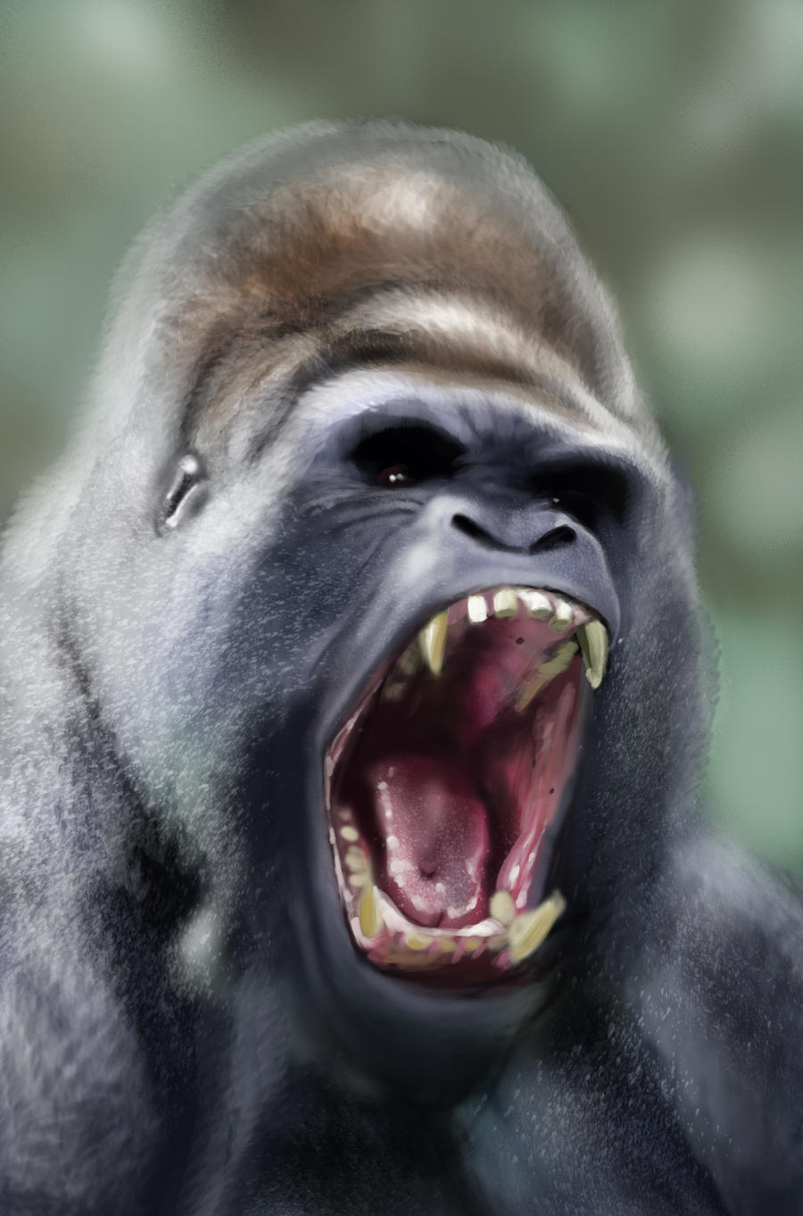 Gorilla Study by JRCoffronIII on DeviantArt - photo#41