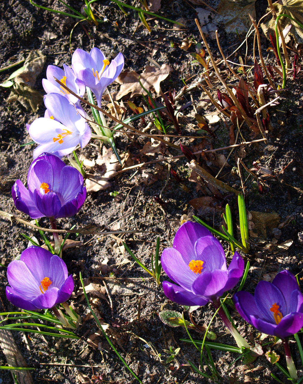 Spring flowers.. by zhaleh