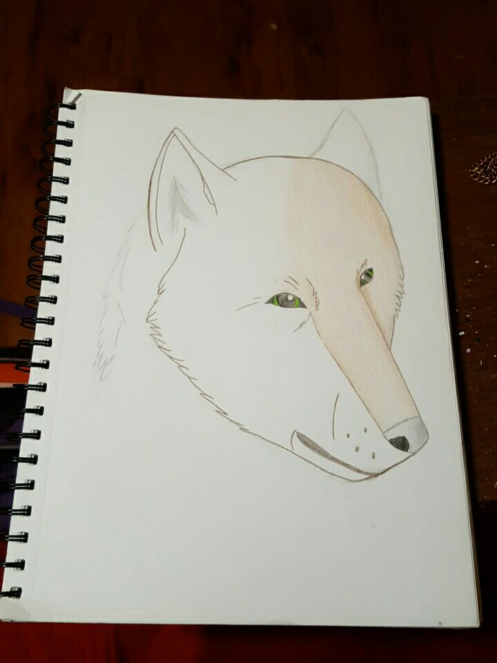 Drawing practice 2 by wolflover1020