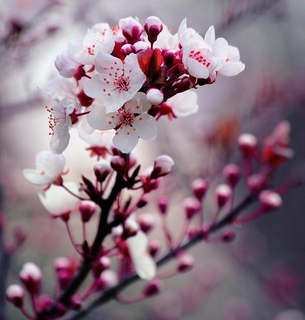 21 Beautiful Spring Photographs Print24 Blog