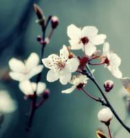 Spring Love II by cimengizem