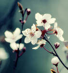 Spring Love II