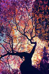 Hi Autumn
