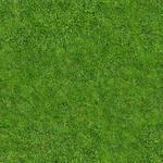 Seamless Tiling - Grass