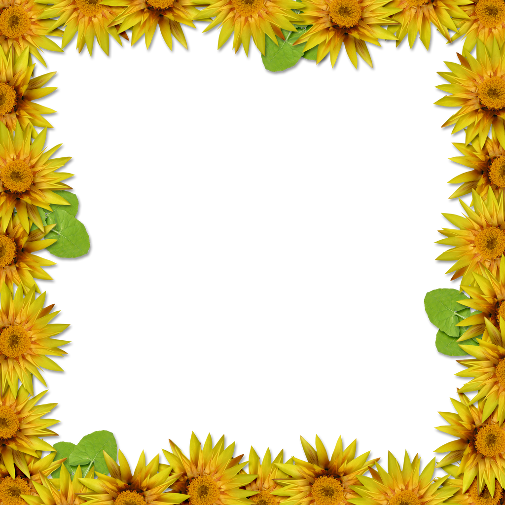 Flower Frame Overlay 2 by HGGraphicDesigns on DeviantArt