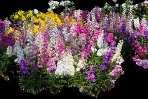 Spring Flowers by ktryon