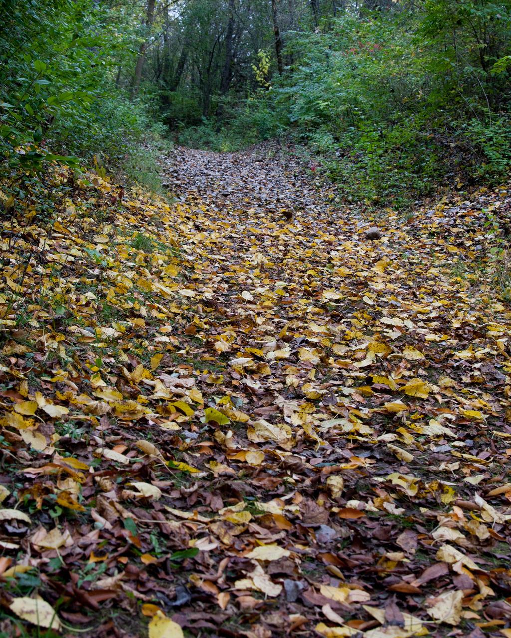 tree path track leaves - photo #31