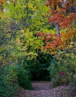 Fall Path by ktryon