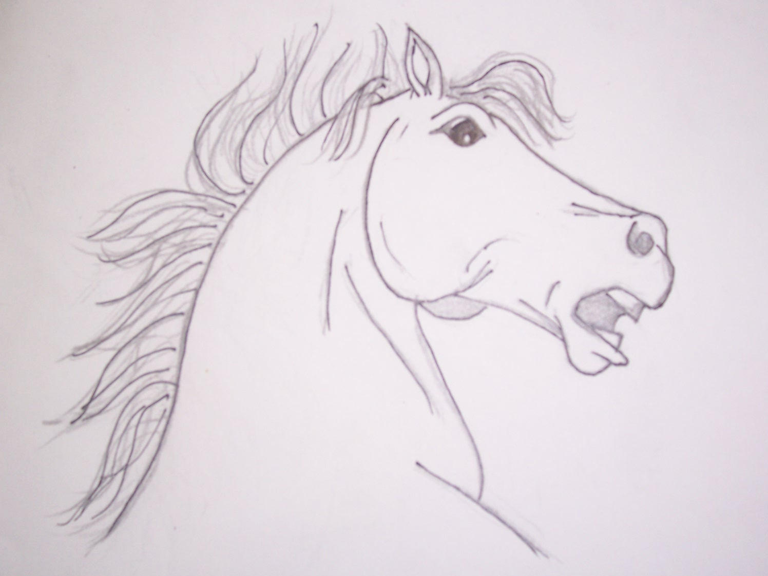 how to easily draw a horse