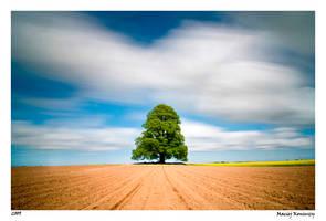 Tree by Maciej-Koniuszy