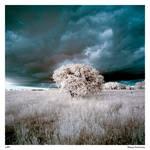 Tree IR 3
