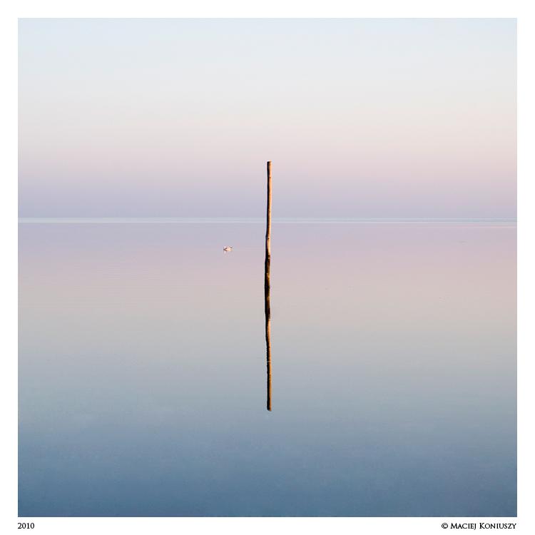Seagull by Maciej-Koniuszy