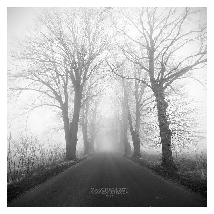 Misty alley by Maciej-Koniuszy