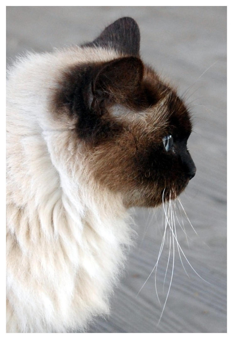 Miss China_Cat Profile by