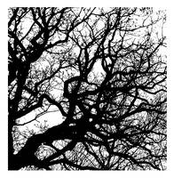 Trees_Black_and_White by time-warrior